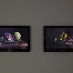 Still life series, 2007high definition videoOcea Sellar, 2007